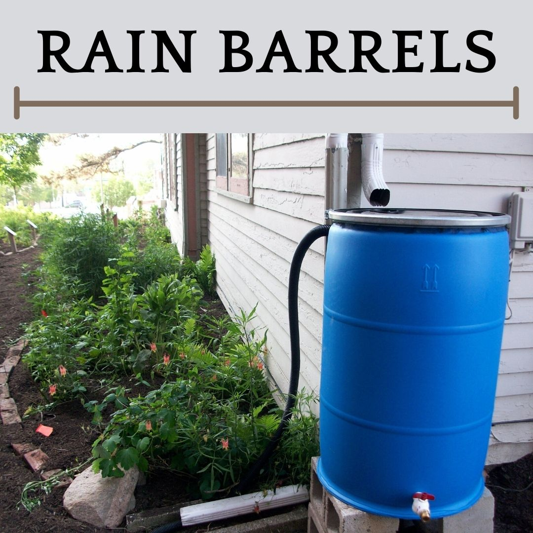 This is an image of a rain barrel