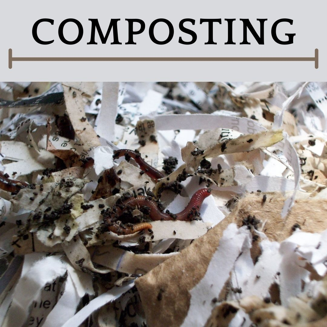 This is an image of vermicomposting